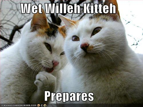 - wet-willy-cats
